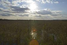 風蓮湖の湿原の画像001