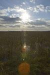風蓮湖の湿原の画像003