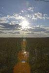 風蓮湖の湿原の画像004