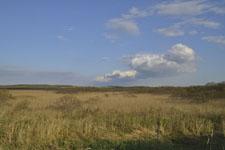 風蓮湖の湿原の画像005