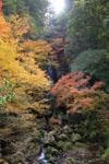 高知の長沢の滝の画像001