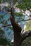 高知の大堂海岸の画像002