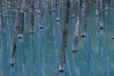 北海道の池の画像014