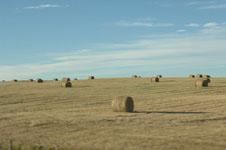 ロッキーの草原の画像003
