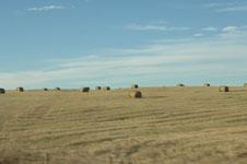ロッキーの草原の画像004