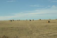 ロッキーの草原の画像005