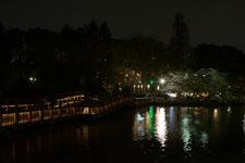 井の頭恩賜公園の橋は夜桜の画像002