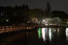 井の頭恩賜公園の橋は夜桜の画像003