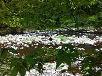 箱根の川の画像002