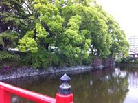 箱根のお堀の画像002