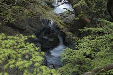 剣山の滝の画像002