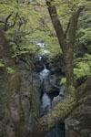 剣山の川の画像004
